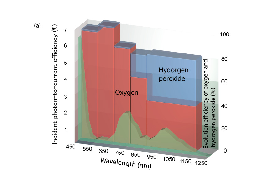 (a) This shows the wavelength dependence of IPCE (incident photon-to-current efficiency), and the wavelength dependence of evolution efficiency of  oxygen and hydrogen peroxide for the photocurrent (bar graph).