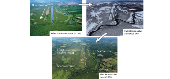Figure 1. River meander restoration project carried out in the Kushiro Wetlands  The river water began to flow again (top right) through the old river course separated from the river by straightening (top left); refilling part of the straightened section with sediment; restoring the meandering river (below).