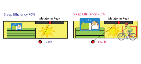 Average of sleep efficiency (%) evaluated from sleep polysomnography recording and peak phase of plasma melatonin rhythms from the control (left) and exercise groups (right). The melatonin rhythm is rapidly phase-advanced, and sleep efficiency was maintained by exercise under bright light conditions.