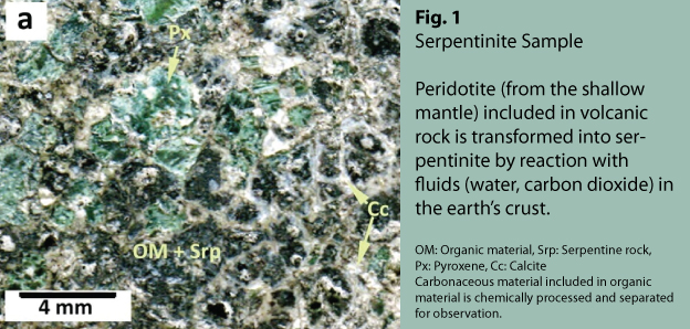 Carbonaceous material found in serpentinite (Fig. 1) from Sicily's Hyblean Plateau was analyzed primarily by a group at Hokkaido University using a transmission electron microscope and micro Raman scattering spectrometer.