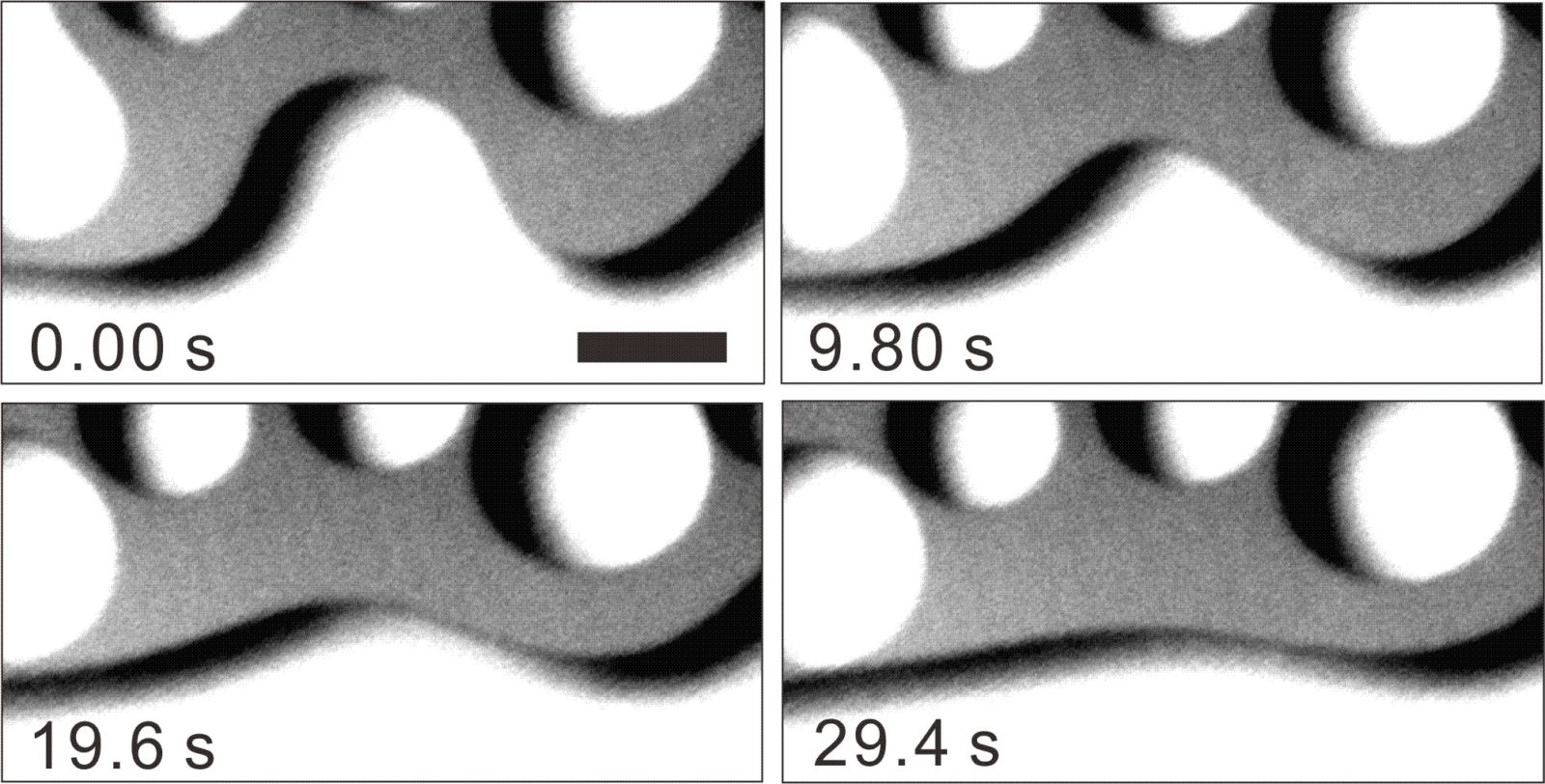 The coalescent and absorption process of small quasi-liquid layers (droplet type) with large ones. We observed the relaxation process that the shape of the droplet perturbed by the absorption recovers its  initial state. Note that the unit in this figure is a second. The black bar corresponds to 20 μm.