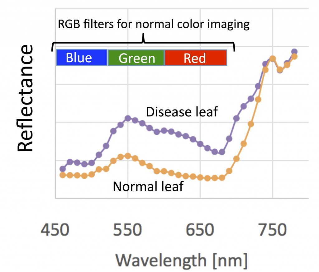 Spectrum of reflectance for leaf that indicating the condition, Hokkaido University