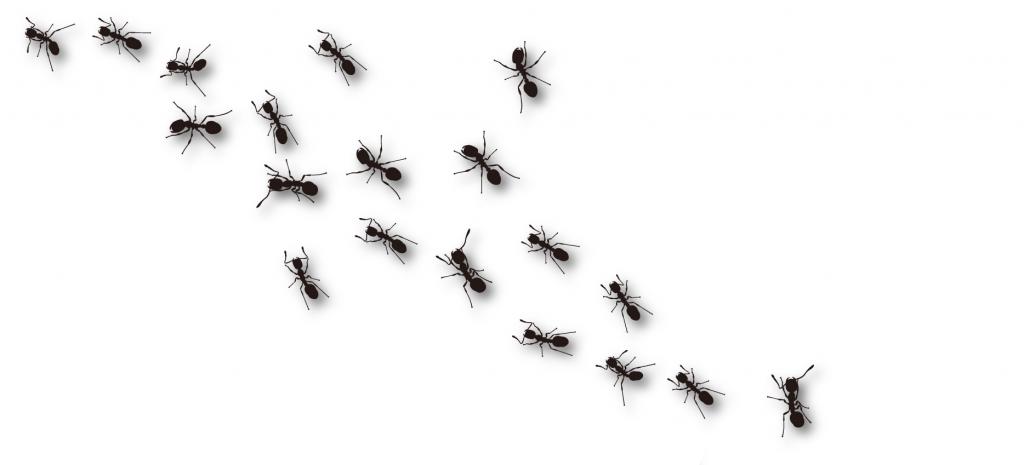 Ants-image
