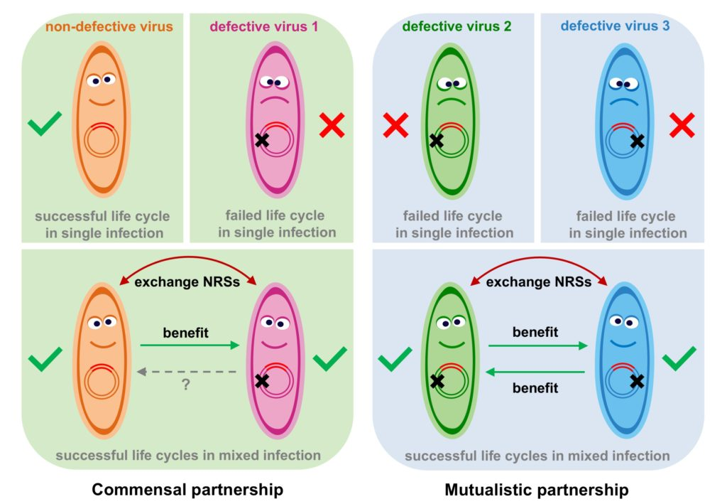 Virus partnership