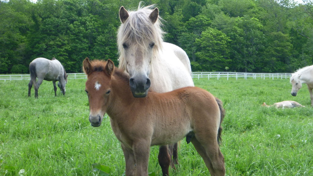 Mother and foal at Shizunai Farm