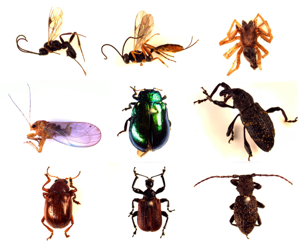 Fig1-Insects sampled in Uryu experimental forest in Japan