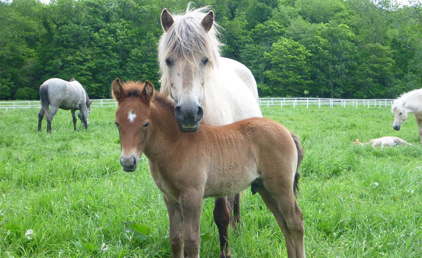 How do horses read human emotional cues? | Hokkaido University