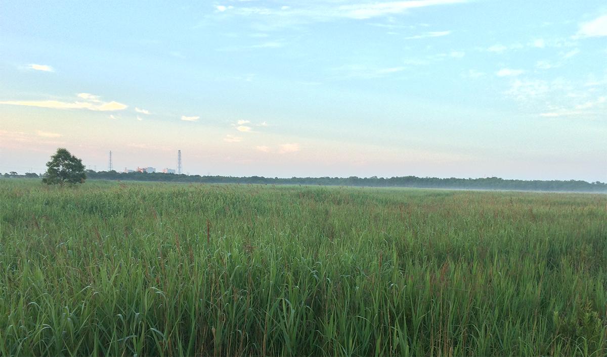 Abandoned wet land