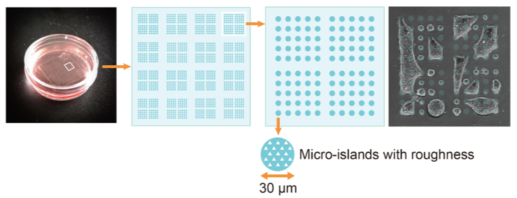 Micro-patterned plate used for the study