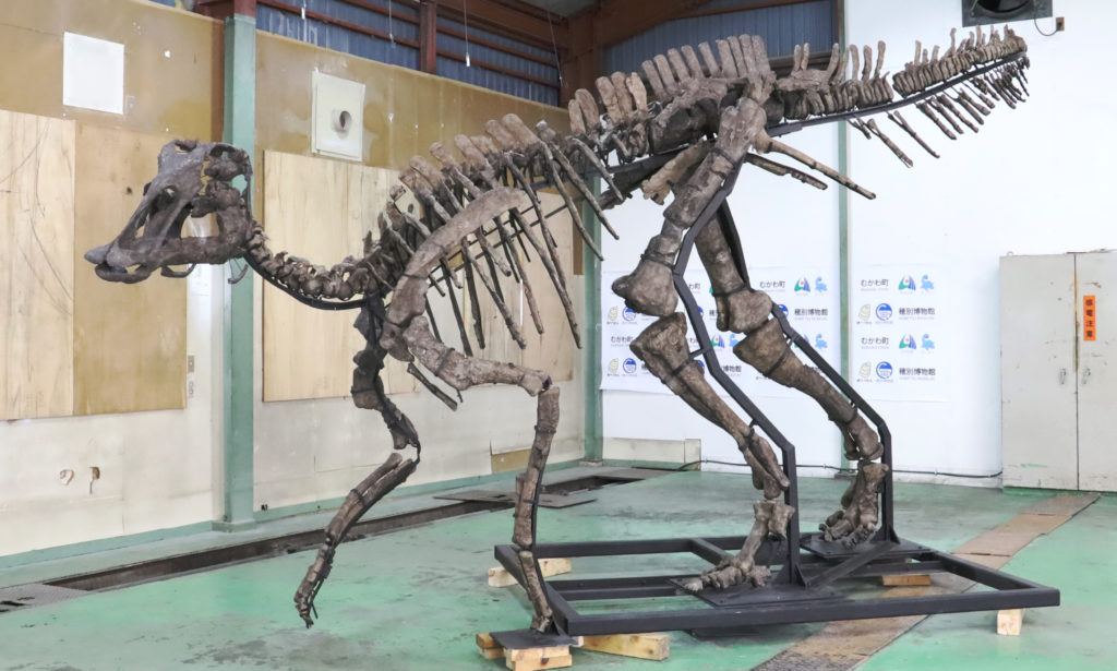 Mukawaryu skeleton on display. Photo by Yu Kikuchi.