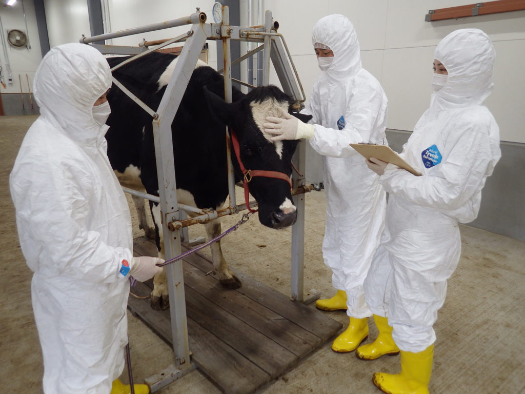 The research team checking a cow's condition.