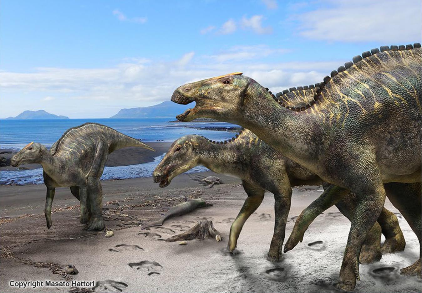 Fantastisk A new duck-billed dinosaur, Kamuysaurus japonicus, identified GH-69